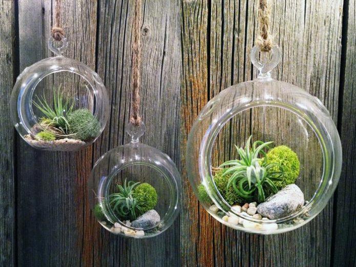 Висячие мини-сады