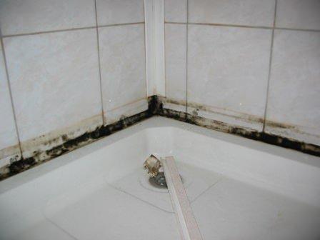 Избавляемся от грибка в ванной