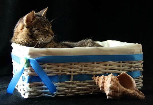 Кошка в плётеной коробке