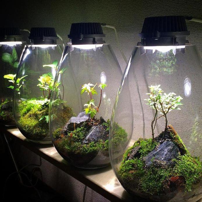 Флорариумы одновременно могут служить светильниками