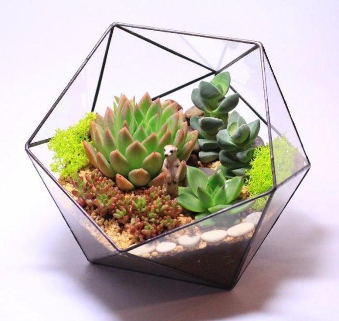 Необычный мини-сад